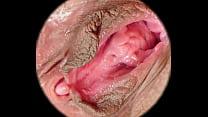 Female textures - Sweet nest (HD 1080p)(Vagina ...