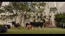 filme da disney live action de dois cachorros a...