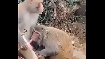 Monkey Fuck Woman Animal Porn   Sex Pictures Pass